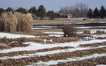 Organic farms such as Giving Tree Farms in Lansing often rely on federal funds for research and certification reimbursement. Those funds were left out of the 2008 Farm Bill.