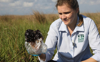 PHOTO: Oil found in Gulf wetlands in 2012. Courtesy: Craig Guillot, NWF