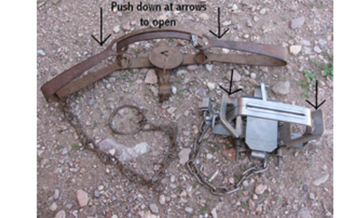 Steel jaw leghold trap.<br />PHOTO Courtesy: Public Domain.<br />
