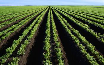 PHOTO: Progress on a new five year Farm Bill has ground to a halt in Washington.