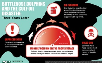 GRAPHIC: This illustration depicts the impact of the Gulf oil spill on dolphins, three years later. Courtesy NWF.