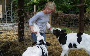Photo: Organically fed cows at Hickory Nut Gap Farm. Courtesy: Hickory Nut Gap Farm