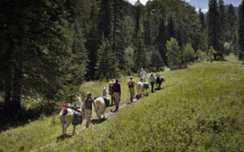 PHOTO: A llama trekking group in the Columbine-Hondo Wilderness Study Area. Courtesy Wild Earth Llama Adventures.<br />