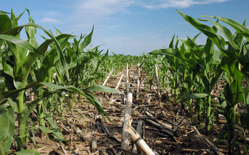 PHOTO: The Center for Rural Affairs says no-till planting is one way America's farmers can help battle climate change. CREDIT: NRCS Soil Health