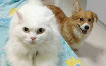 Hundreds of pets available for adoption this weekend. Photo courtesy of North Shore Animal League America.