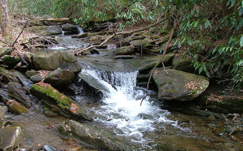 PHOTO: The Tennessee Wilderness Act has been reintroduced in Congress by the state's two U-S Senators. The legislation seeks to permanently protect 20,000 acres of the Cherokee National Forest and add the state's first new wilderness area in more than a quarter-century. CREDIT: Chris M. Morris