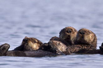 PHOTO: Four fishermen groups want the U.S. Fish and Wildlife Service to reverse its decision to end the