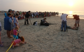 PHOTO: A crowd gathered to watch the release of baby sea turtles at Padre Island National Seashore. Credit: National Park Service