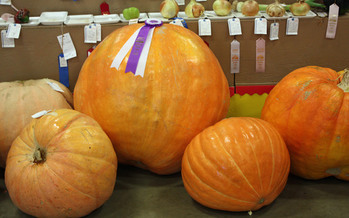 PHOTO: Big pumpkins and big ideas. AARP Iowa has set up a 'listening' post at the Iowa State Fair to gather ideas about the future of Medicare and Social Security. Photo credit: Deborah C. Smith