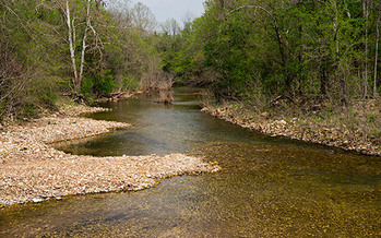 PHOTO: A lawsuit over government subsidies for a huge confined pig operation next to this tributary of the Buffalo River says hog waste run-off could damage the pristine water of a national park that draws a million visitors annually.
