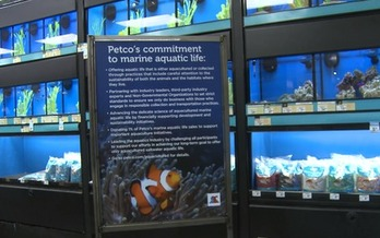 Photo: PETCO will start educating consumers about the importance of buying aquacultured fish. Courtesy: Defenders of Wildlife.