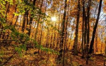 PHOTO: Colors are changing with the seasons in the Western North Carolina Mountains. Courtesy Blue Ridge Conservancy.