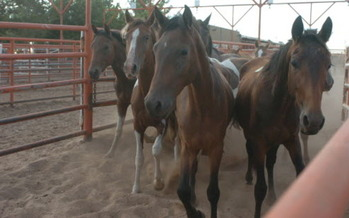 PHOTO: A court action is stopping Valley Meat Company in Roswell, New Mexico, from starting its horse slaughterhouse, at least temporarily. Photo courtesy HSUS.