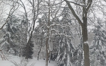 PHOTO: As picturesque as the freshly fallen snow may be, doctors encourage Michiganders to enjoy the view from inside because the extreme cold poses serious potential health risks. Photo courtesy of Mona Shand