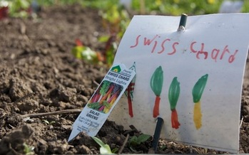 PHOTO: There are about 500 vegetable gardens planted at Oregon schools, and the state's first School Garden Summit takes place on Mon., Jan. 13 near Salem.  Photo credit: Linda Colwell