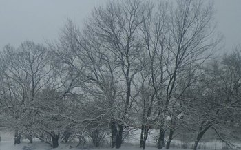PHOTO: Despite the cold snap Ohio is experiencing, an expert says global warming is real. Photo credit: M. Kuhlman