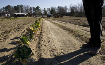 PHOTO: It is estimated that 30 percent of farmers and 90 percent of farm workers in North Carolina don't have health insurance – and some may be hesitant to sign up under the Affordable Care Act. Photo courtesy RAFI USA.
