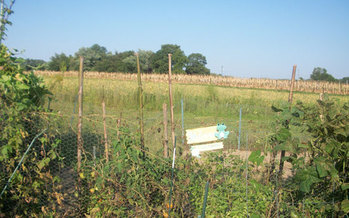 PHOTO: A network of community gardens in Pennsylvania will provide nutritious fruits and vegetables to low income residents. Photo courtesy of wikimediacommons.
