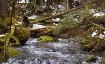 PHOTO: Mossy Creek, a tributary of the Salmon River, is one of many smaller Oregon streams that doesn't receive Clean Water Act protections. The EPA has proposed a rule to protect more small or seasonal streams. Photo credit: Nic Callero, National Wildlife Federation.