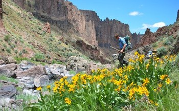 PHOTO: A hiker explores the West Little Owyhee River Canyon in southeast Oregon's Owyhee Canyonlands. An independent economic analysis says protecting the area could be a much-needed boost for the Malheur County economy. Photo credit: Tim Neville.<br />Photo by Tim Neville