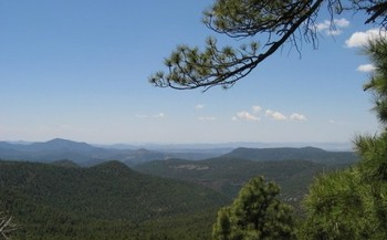 PHOTO: Conservationists in New Mexico are reacting to the federal government's plan for all future travel inside the huge Gila National Forest, located in the southwestern part of the state. CREDIT: U.S. Forest Service.